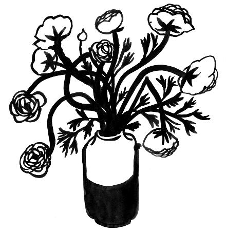 Ranunculus_2_440